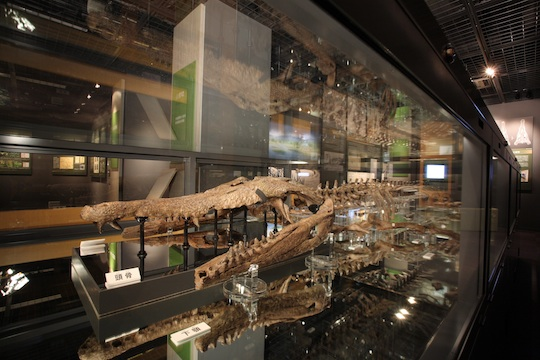 マチカネワニ化石